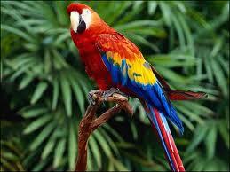 Müslüman Papağan ihlas suresini Okuyor ve dahası